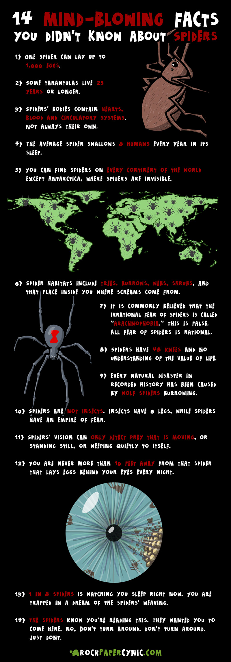 we share crazy, wacky, and little-known facts about spiders! WOW!